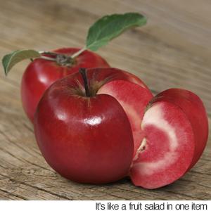 apple1111