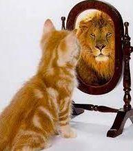 cat-lion-perception-reality