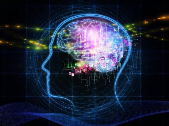 brain-100691512-large