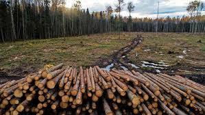 Er verdwijnt 'Amsterdam' aan bos per jaar door biomassa – Zin en onzin over  biomassa